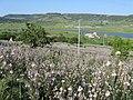 ASFODELI - panoramio.jpg