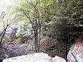 AUT 2579 ForestWander.JPG