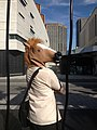 A Horse in the City (8907837030).jpg