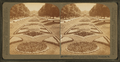 A beautiful garden avenue in Fairmount Park, Philadelphia, Pa, from Robert N. Dennis collection of stereoscopic views.png