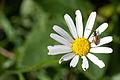 A beetle home (8404200125).jpg