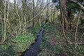 A walk through Harrison's Plantation (2) - geograph.org.uk - 722427.jpg