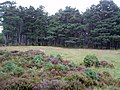 Abernethy Forest at Bognacruie - geograph.org.uk - 1437262.jpg