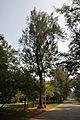 Acharya Jagadish Chandra Bose Indian Botanic Garden - Howrah 2011-01-08 9837.JPG