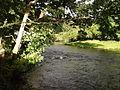 Afon Dyfrdwy at Garth y dwr - geograph.org.uk - 55160.jpg
