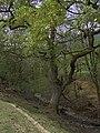 Afon Fachdre - geograph.org.uk - 809649.jpg