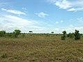 African landscape (393188325).jpg