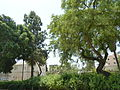 Afula Tegart Fort Police Station, Afula P1170729.JPG