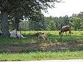 Alabama Livestock.jpg