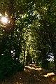 Alei de larice și tei, monument al naturii amplasat în raionul Călărași, satul Rassvet IMG 01.jpg