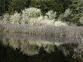 Allen crabapple reflection stream river NPS Photo (23110117841).jpg