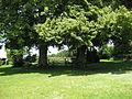 Alter Friedhof von Asche.jpg