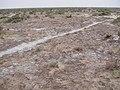 Alxa Zuoqi, Alxa, Inner Mongolia, China - panoramio (63).jpg