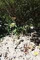 Andromeda Botanical Gardens 23.jpg