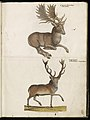 Animal drawings collected by Felix Platter, p2 - (133).jpg