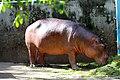 Animals in Thailand Photographs by Peak Hora (12).jpg