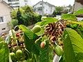 Annecy-le-Vieux (50883908681).jpg