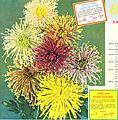Annual mum carnival (1957) (18427015161).jpg