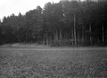Ansicht Befestigungen im Wald - CH-BAR - 3241754.tif