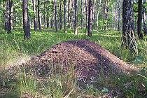 Ant hill cm02.jpg