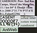 Apomyrma stygia casent0000077 label 1.jpg