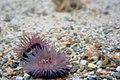 Aquarium landschap (3042611167).jpg
