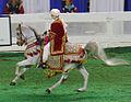 Arabian Costume Horse (2395778358).jpg
