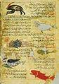Arabic-Manuscript-Zoology.jpg