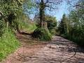 Ashcombe Footpath 4 leaves the lane - geograph.org.uk - 1271553.jpg