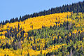 Aspen on San Francisco Peaks (3971467765).jpg
