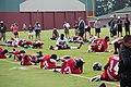 Atlanta Falcons players warm up at training camp July 26, 2013.jpg
