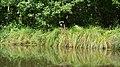 Auray (River)LeLochAmont de la Rivière d'AurayAout2018MorbihanLamiotMF 09.jpg