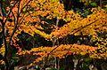 Autumn foliage 2012 (8253631592).jpg