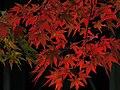 Autumn red - panoramio (1).jpg