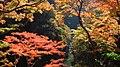 Autumn red - panoramio (10).jpg