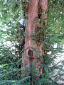 Bäume 125.JPG