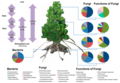 Bacterial and fungal community in a mangrove tree.webp