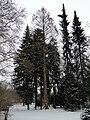 Bad-homburg-kurpark-flora-0082w.jpg