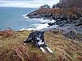 Basil at Rubha nan Sailthean - geograph.org.uk - 1047653.jpg