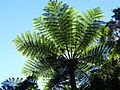 Baum (30687484954).jpg
