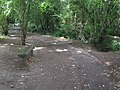 Bench beside Penn Stream woodland Path, Tonbridge - geograph.org.uk - 1403670.jpg