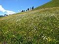 Bergfrühling-Schweizer-Alpen-01.jpg