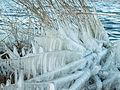 Bevroren riet.jpg