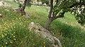 Bierain Sub-District, Jordan - panoramio (20).jpg