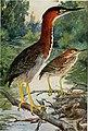 Bird-lore (1913) (14753172504).jpg