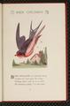 Bird Children-0085.png