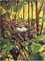 Bird homes - the nests, eggs and breeding habits of the land birds breeding in the eastern United States; with hints on the rearing and photographing of young birds (1902) (14568660319).jpg