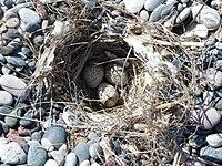 Bird nest beach Rhodos 21