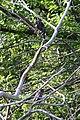 Birds - London, Ontario.jpg