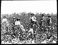 Black cotton farming family.jpg